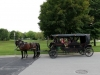 carriage-ride-bulitz-carriage-rides-2