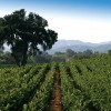 Paso Robles -- Spring Break's Hidden Gem for Families