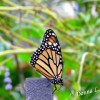 Gainesville, Florida - Spend Your Spring Break With Butterflies and Alligators