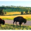 Summer Vacation Road Trip -- Black Hills, South Dakota