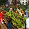 Uncommon Ground: Urban Farming and Family Dining in Chicago