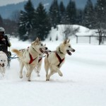 Skytop Lodge in the Pocono's Offers Dog Sledding for Families