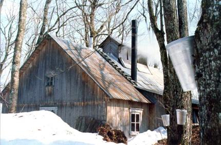 Maple Syrup Sugarcamp Road Trips For Families