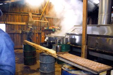 Maple Syrup Making Indiana