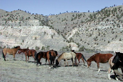 BH Wild Horse Sanctuary - Photo by Rick W. Mills