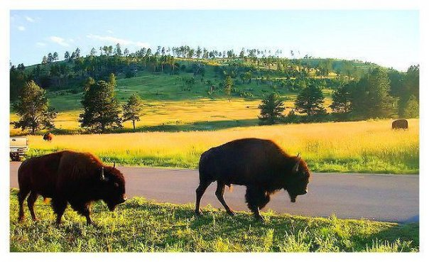 Summer family vacation black hills south dakota for Cabine black hills south dakota