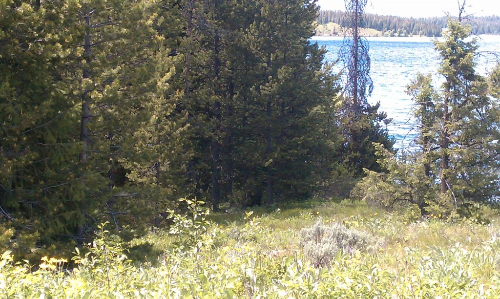 We saw a bear in Yellowstone.