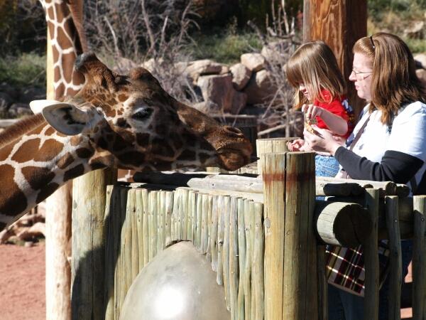 Mtn Zoo