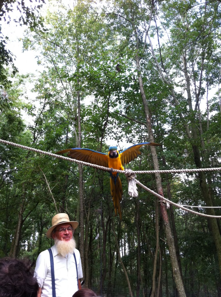 Our wagon passes under a macaw.