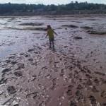 Mud Flats at the Bay of Fundy