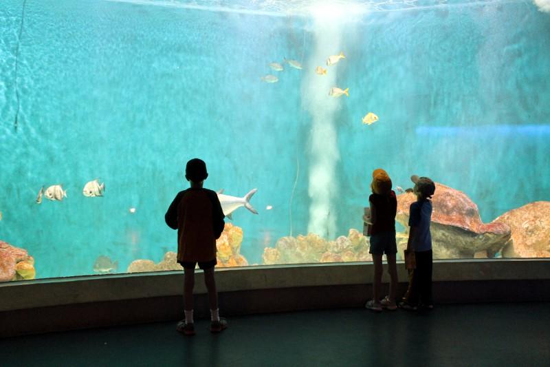 Gulf Aquarium