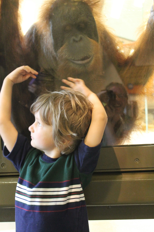 Quinn and Orangutan at Indianapolis Zoo