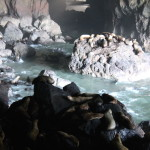 Sea Lion Cave Verticle