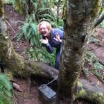 Tree Peek