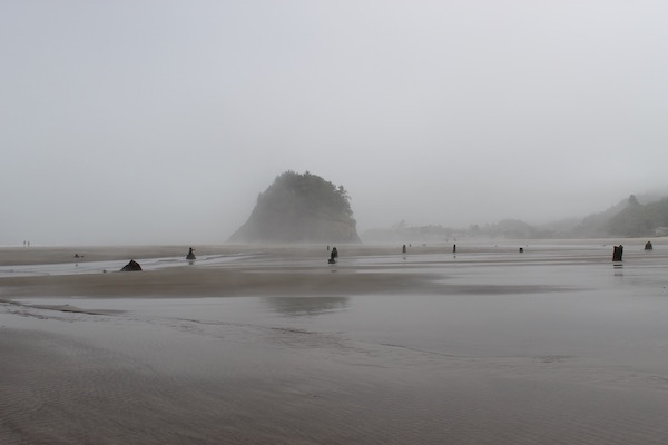 Ghost Forest Neskowin