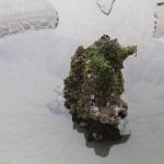 Tree Stump in Tidepool