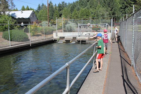 Willamette fish hatchery oregon 39 s most awesome fish for Fish farms near me