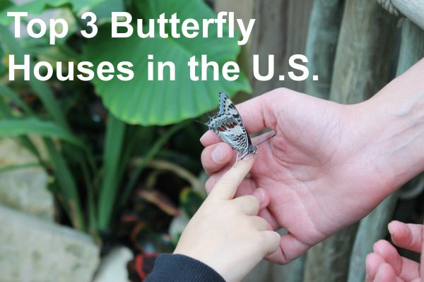 Insects are In! Top Three Butterfly Houses in the U.S.