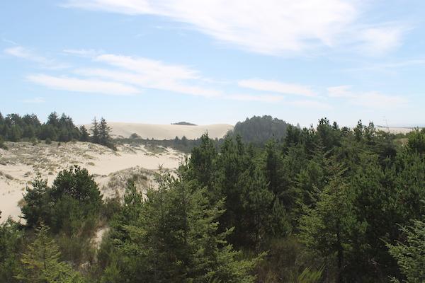 Orego Dunes View