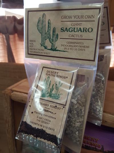 cactus seeds