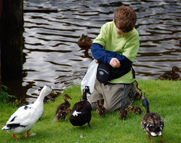 Foster feeds the ducks.