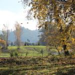 Micelli Park