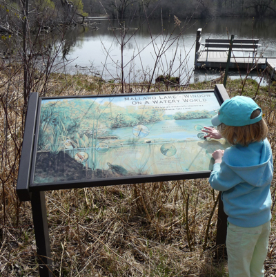 Pond Exploration at Wehr Nature Center