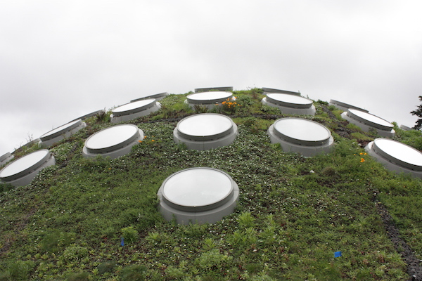 Living Roof - California Academy of Sciences