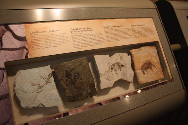 Fossils at the Carnegie Museum of Natural History