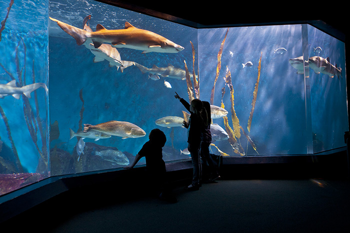 Maritime Aquarium