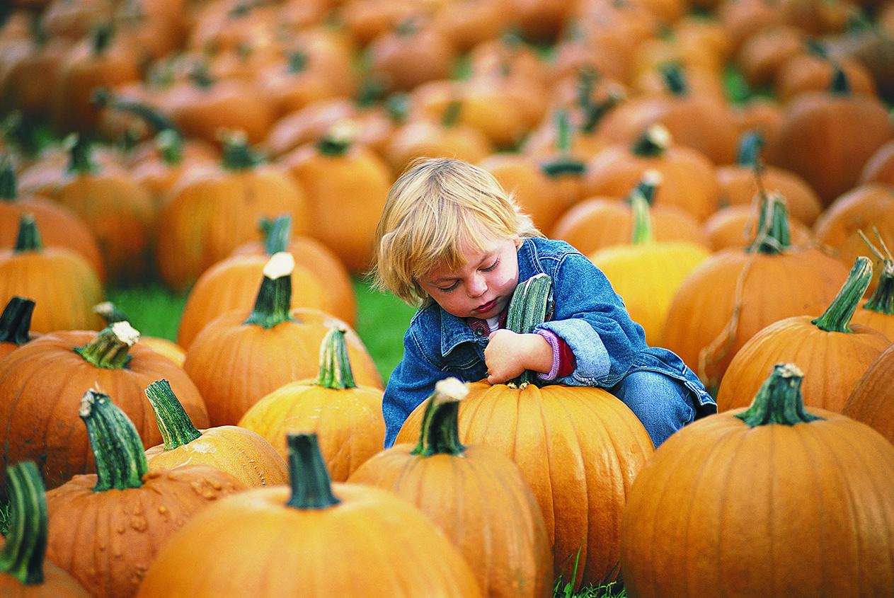 Cooper with Pumpkin1