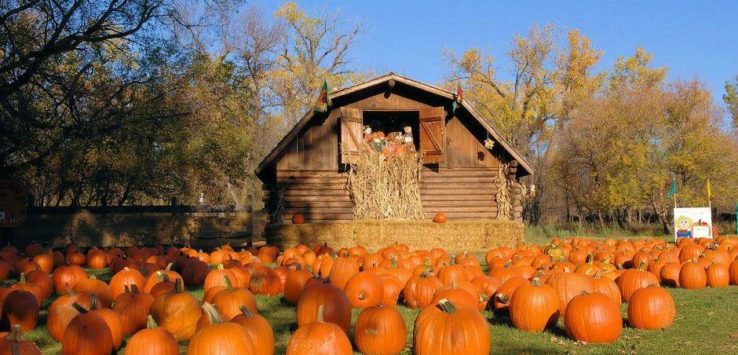 Pumpkin Patches In North Dakota Road Trips For Families