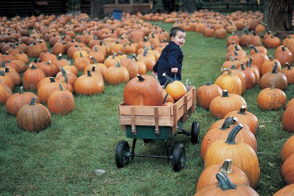 pumpkins fargo
