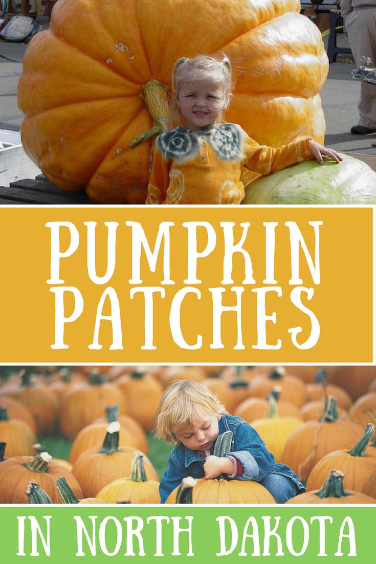 pumpkin patches nd