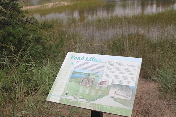 interpretive-sign-luddington-state-park