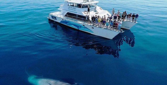 brydes_whale_-_hauraki_gulf_marine_park_new_zealand
